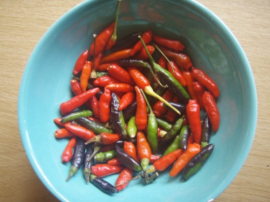 Bird's Eye Chilli
