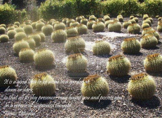echinocactus_by_selinarainbowmoon-d5fi1er