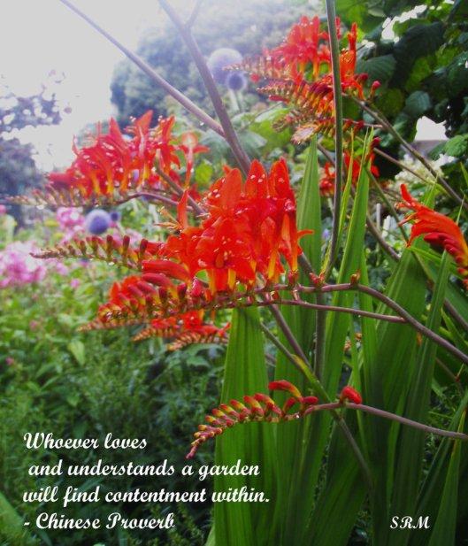 garden_by_selinarainbowmoon-d5h9xbz