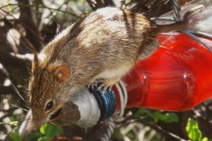 mouse water