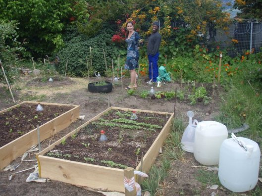raised beds - allotments