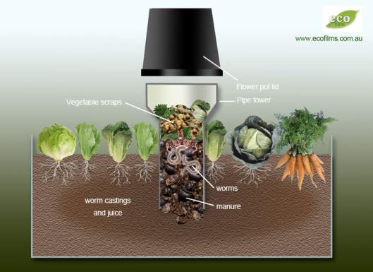 worm farms in your veg garden