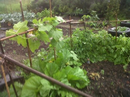 j garden butternut