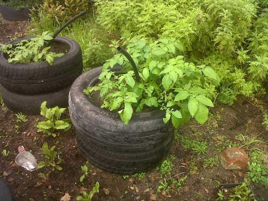 potato tyres 2