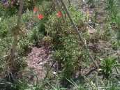 Worm garden