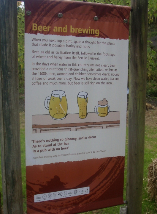 When next taking a sip of a pint, spare a thought for the plants that made it possible, Barley and Hops