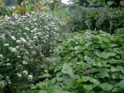 Lush plantings