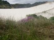A scramble over the dunes