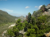 A View of Fish Hoek, Aloes growing wild
