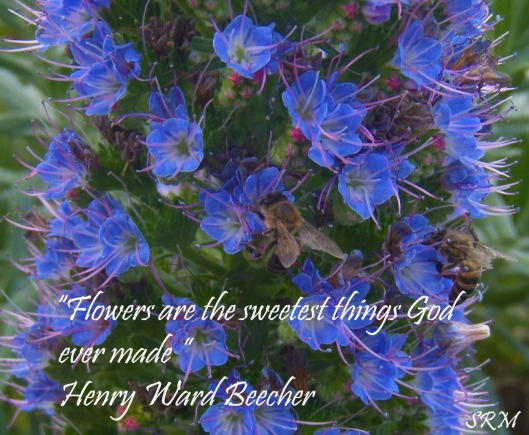 Flowers are the sweetest thing God ever made. Henry Ward Beecher.