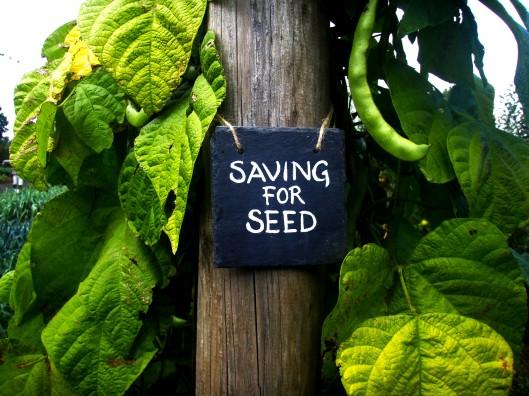 Saving for Seed