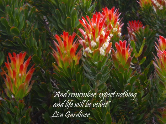 And remember, expect nothing and life will be Velvet. Lisa Gardiner