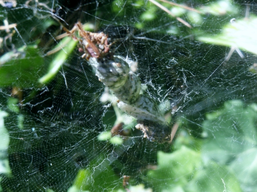 Egg sac and nursery