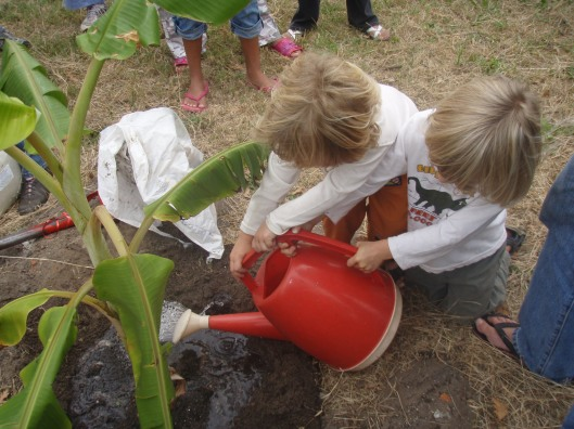 The Fort children watering the new banana