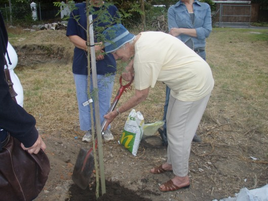 June Fourie planting the Fever Tree kindly donated by Julia Casciola