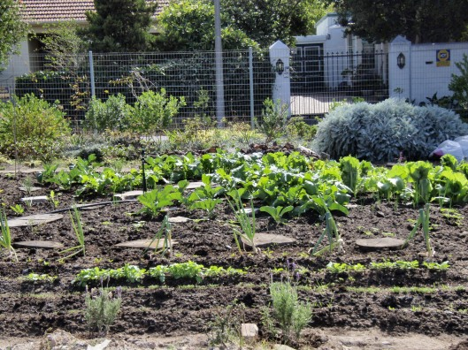 The first Vegetables growing