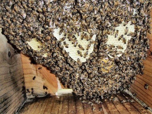 The first Bee hive