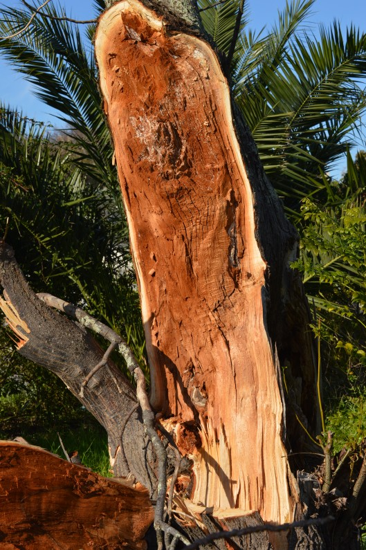 this tree has suffered so much damage that it will will now have to be cut down.