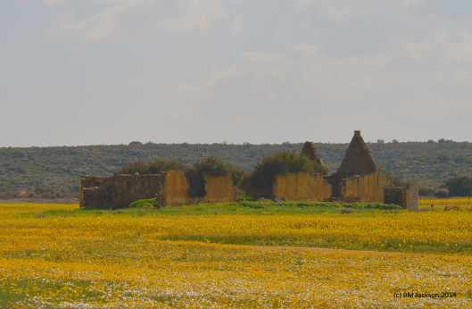 Ruins in a field of flowers