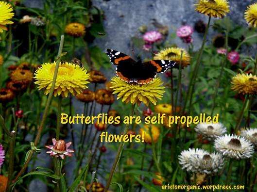 Butterflies are self propelled flowers!