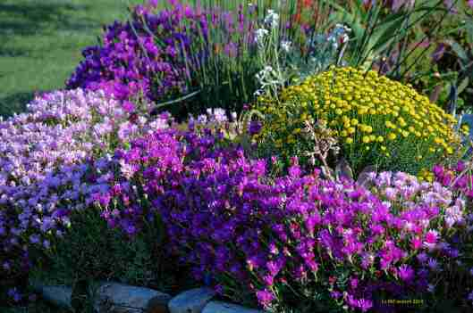 Natures Garden Organic Raw Powder Energizer