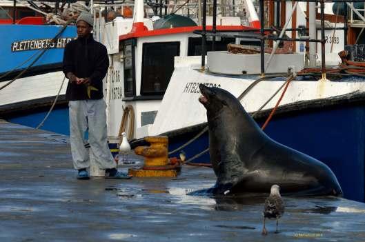 A seal whisperer